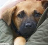 german-shepherd-puppy-photography-by-kathy-mackenzie
