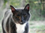 cat-photography-by-feather-and-fur