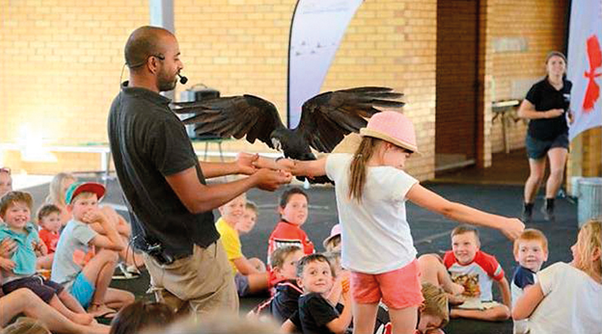 School Bird Shows