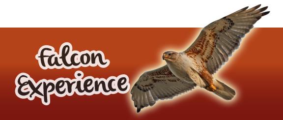 Falcon Experience