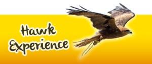 Hawk Flight Experience