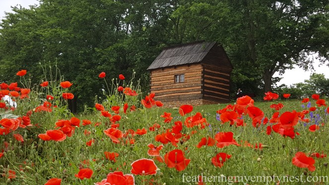View of Mulberry Row through the poppies at Monticello --History Geeks Tour of Monticello