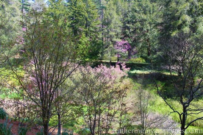 Spring Garden --A Spring Tour Of The Biltmore Estate Gardens