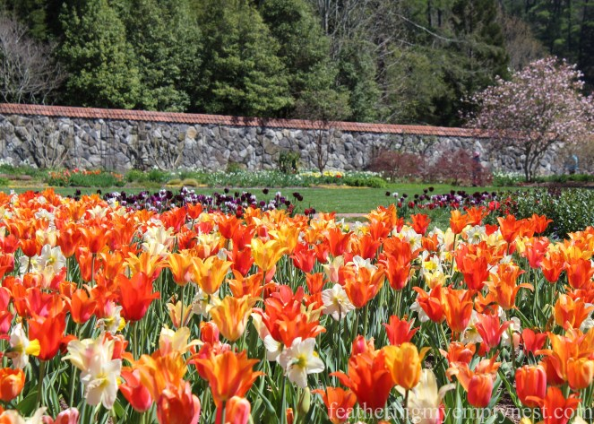 Spectacular display of thousands of tulips in the Walled Garden --A Spring Tour Of The Biltmore Estate Gardens
