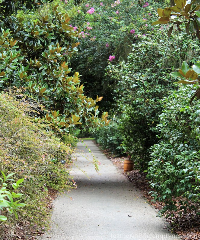 Camellia Allees --Exploring The Enchanting Gardens Of Middleton Place