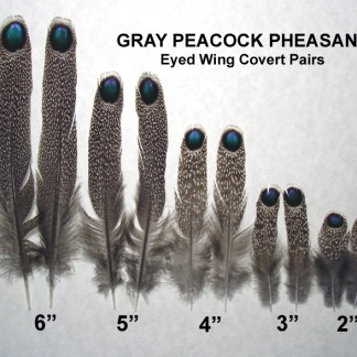 Peacock Pheasants