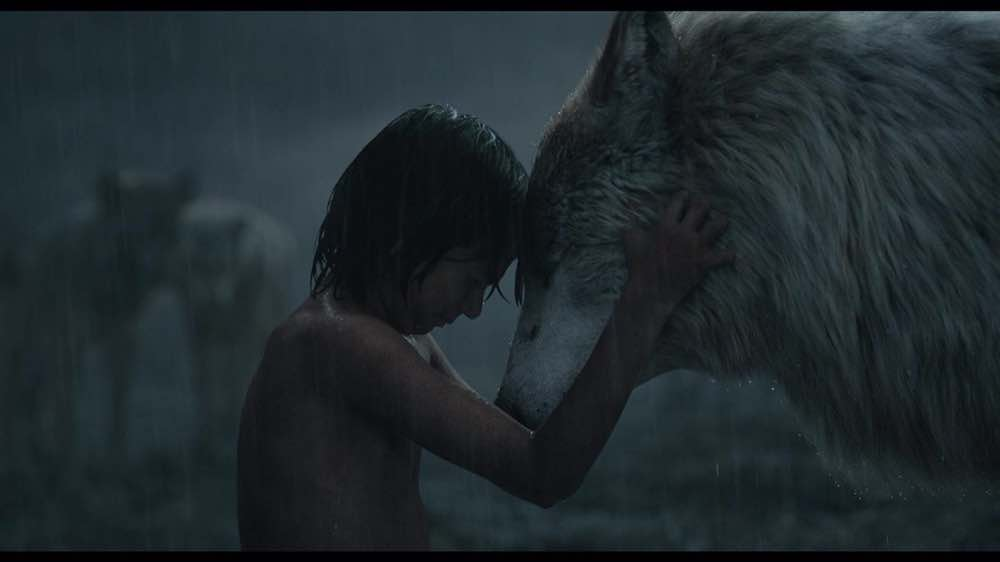 The Jungle Book 2016 Mowgli and Rakshaw touch foreheads in the rain