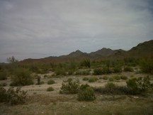 desert blooms arizona