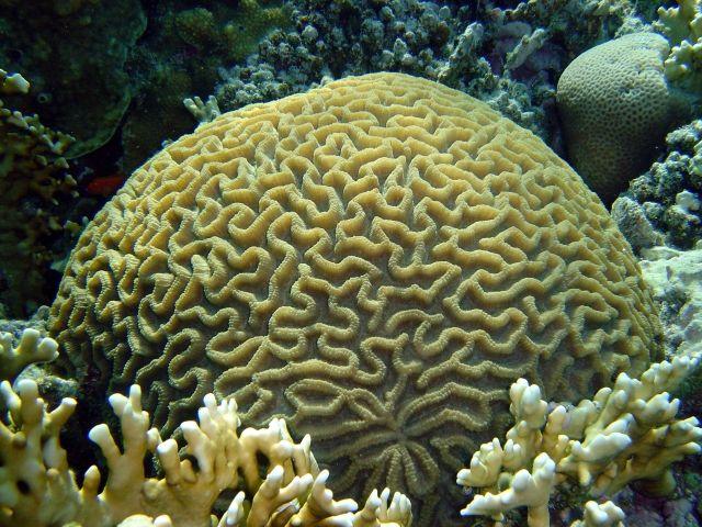 ¿Te has preguntado qué es un coral?