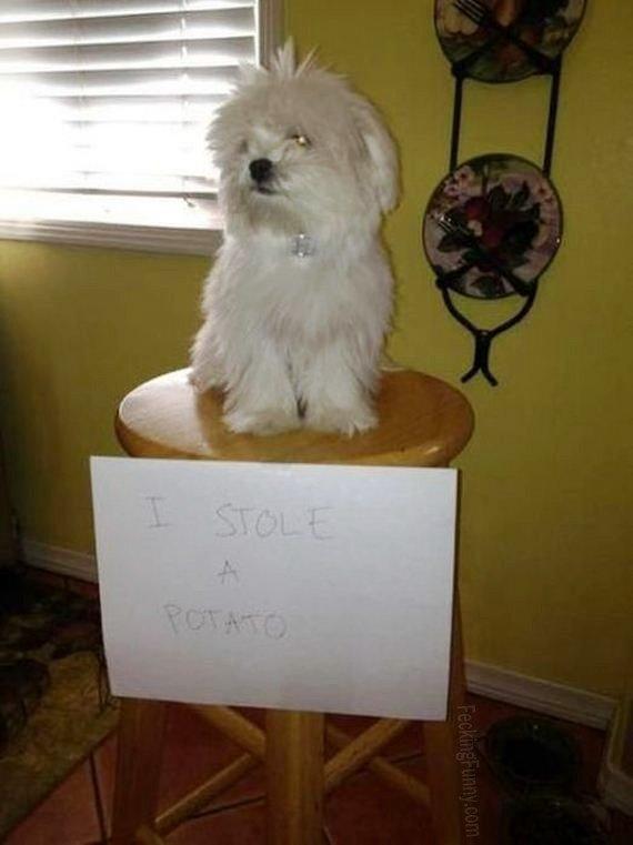 Guilty Dog Steal Potato Animal Dog Funny Guilt
