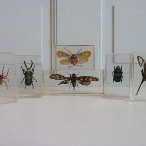 Insectes sous inclusion de résine anciens