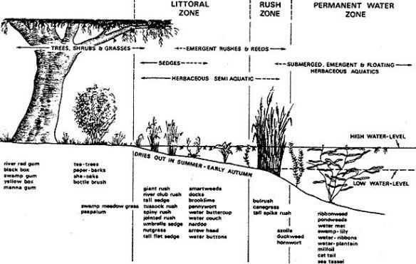 reforestation zones.jpg