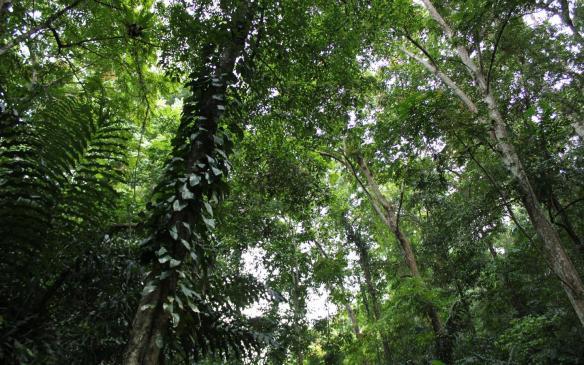 PH-ForestTrees.jpg