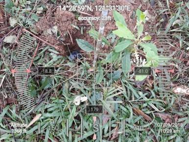 Hi-Las-Marketin-Corp-CSR-geo-tree-tags-FEED20181