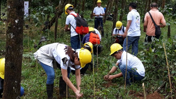 hilas-marketing-corp-reforestation-feed-07sep201865