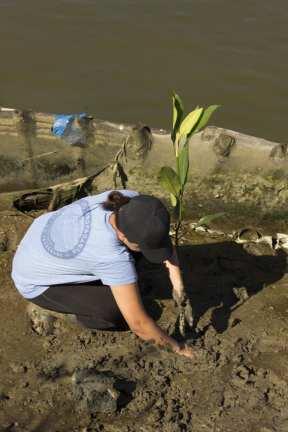 planting individual 1
