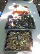 LUSC-CoralProp-Meals-2