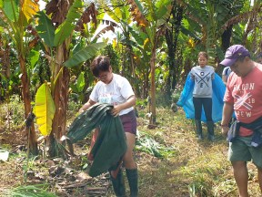 EcoMatcher-FEED-OurBetterWorld-1000Trees51