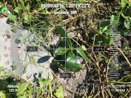 FEED-KARPOS-BOTONG-Planting-Urbiz-271020194