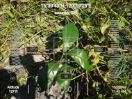 FEED-KARPOS-BOTONG-Planting-Urbiz-271020196
