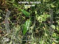 FEED-KARPOS-BOTONG-Planting-Urbiz-271020197