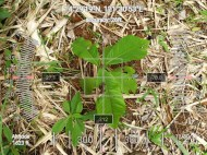 FEED-LL-CSR-BOC-1-LQLG-1-30NOV201913