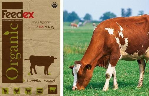 Organic Cattle Feed - Feedex Organic Livestock Feed