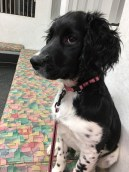 Winnie at the vet - 4 months