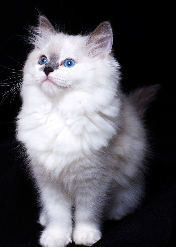 25 Cute Pets Pictures Gallery