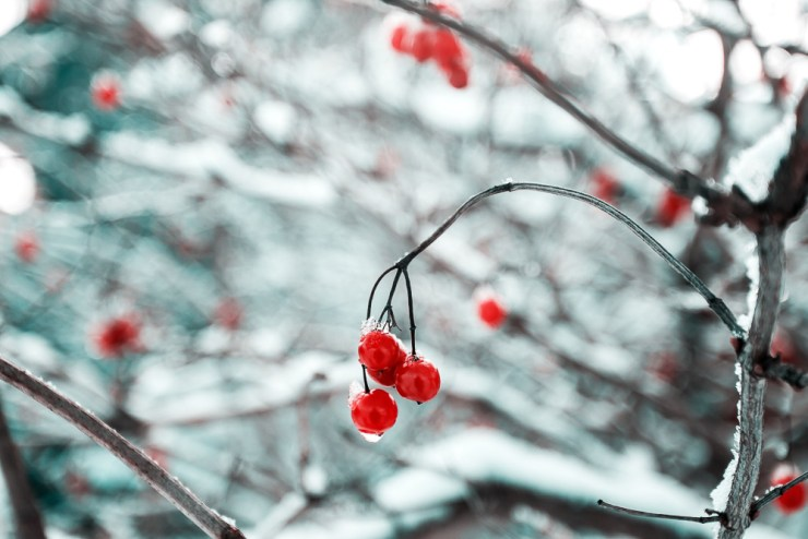 winter-frost-unsplash-1