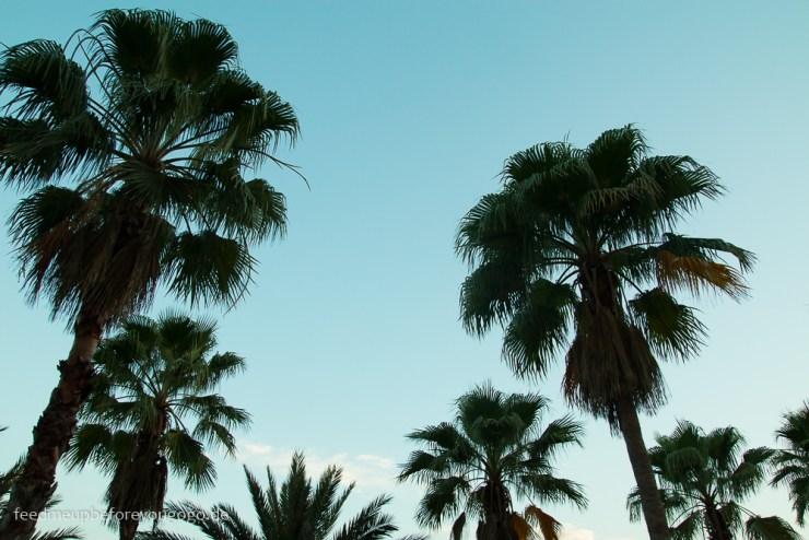 Palmen Orlando Florida