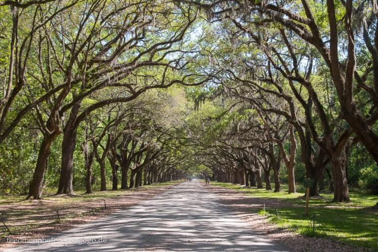 Savannah Georgia Eichenallee Südstaaten Wormsloe Plantation
