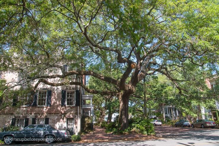 Savannah Georgia Jones Street die schönste Straße Nordamerikas Südstaaten