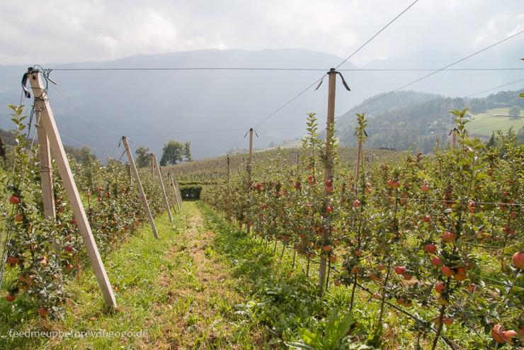 Kohl Bergapfelsäfte vom Ritten Apfelbäume Berge Südtirol Italien
