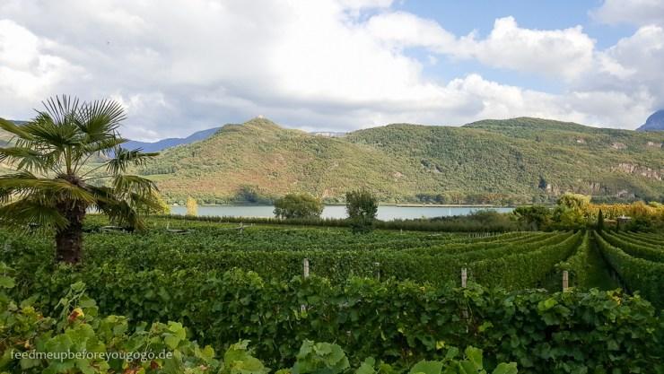 Kaltern am See Blick auf Weinreben und See