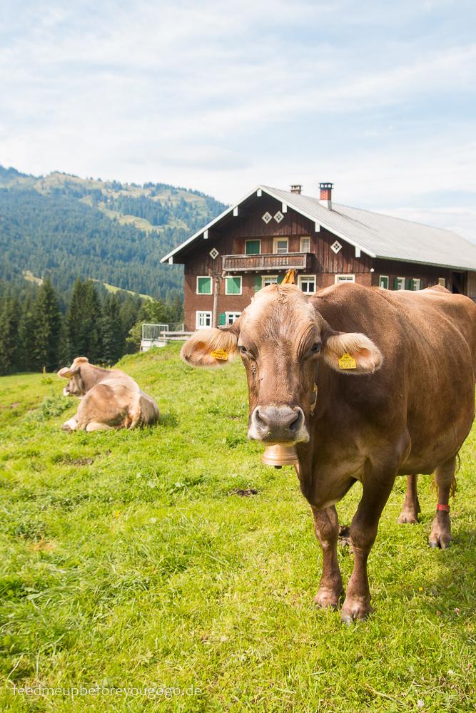 Kuh in den Bergen Balderschwang Allgäu