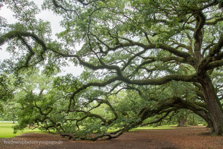 Oak Alley Plantation alte Eiche Vacherie Louisiana