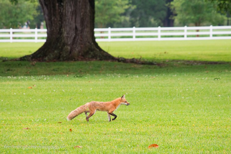 Oak Alley Plantation Fuchs Vacherie Louisiana