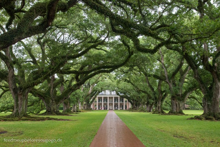 Oak Alley Plantation Eichenallee mit Plantagenhaus Vacherie Louisiana
