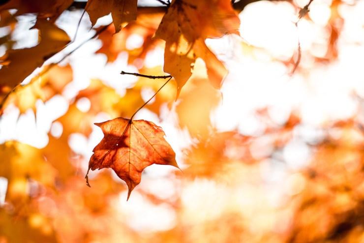 Herbst orange Blätter