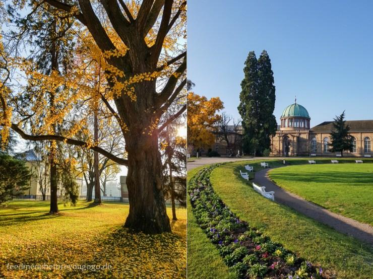 Reisetipps Karlsruhe Schlossgarten botanischer Garten