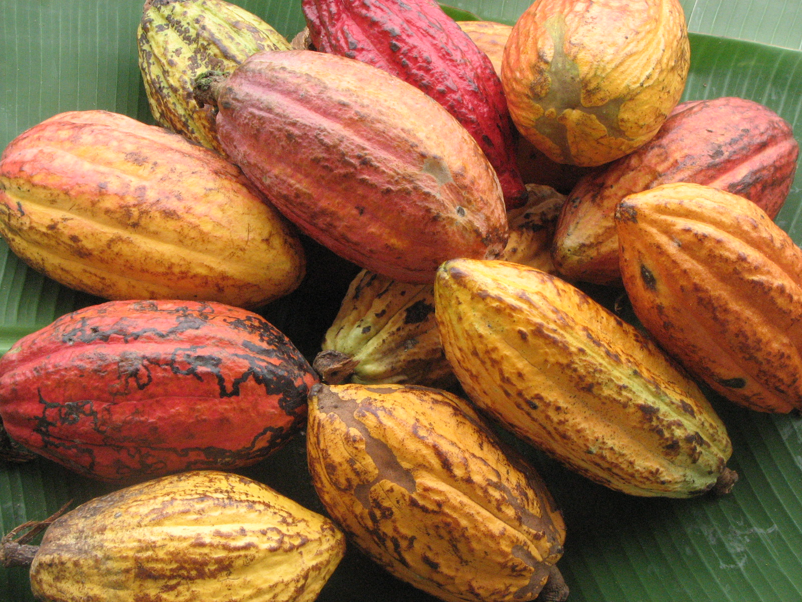 Cacao Pods Feed Your Skin Blog