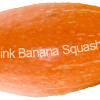 The How To's of Pink Banana Squash