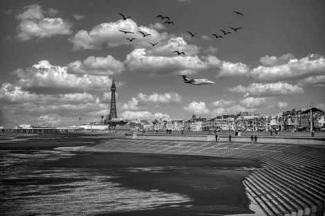 grayscale photo of birds flying over the city