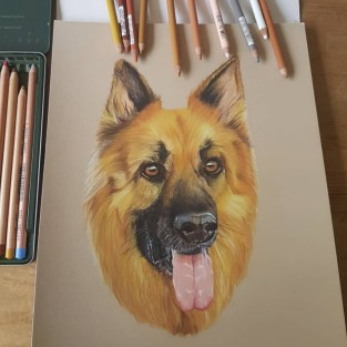 Hand drawn picture of an Alsatian dog