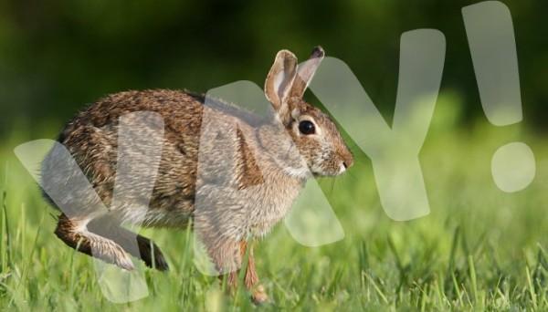 Animal Rights WIn! Sao Paulo Bans Animal Testing!