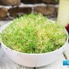 How to make Sprouts
