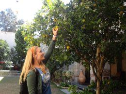 cate oxacaca oranges