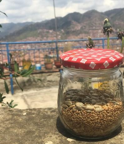 seeds in jar