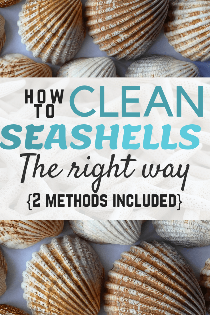 how to clean seashells without using bleach